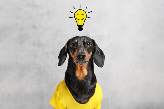 smart and clever dog  dachshundwith a light bulb with a smile, over your head. having an idea.