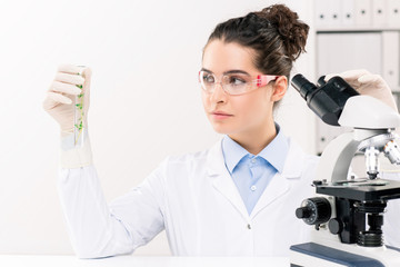 Young female biologist looking at flask while studying green plant in laboratory