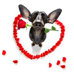 Wall Murals Crazy dog valentines wedding dog in love
