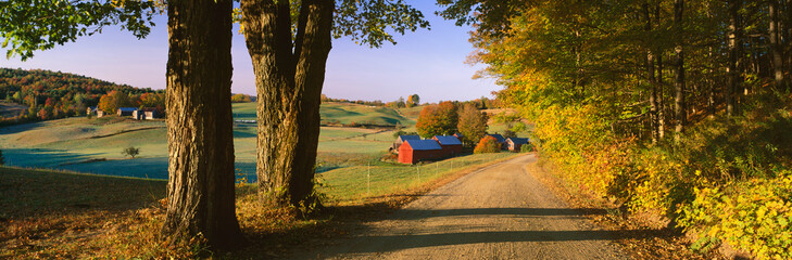 Wall Mural - This is the road leading past the Jenne Farm.