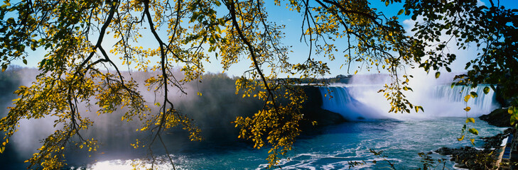 Wall Mural - This is the Horseshoe Falls with an overhanging tree. It is the view from Canada.