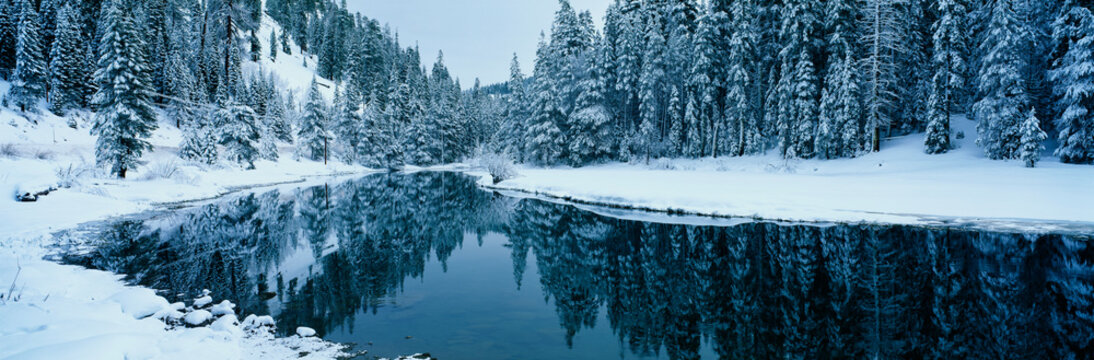 This is the Lake Tahoe area after a winter snow storm. There is snow covering the trees surrounding a stream. The winter trees are reflected in the stream.