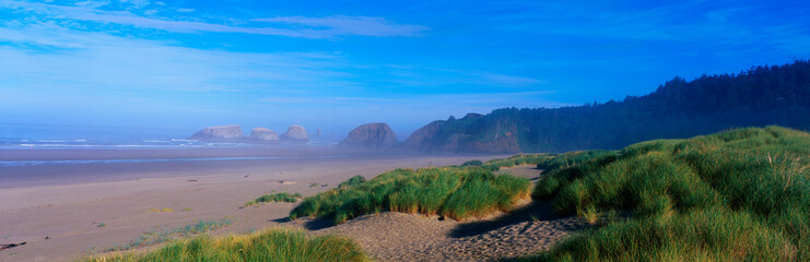 Wall Mural - This is the sand and rocky beach along the Oregon coast. There is a slight mist along the beach and patchy areas of grass growing along the beach as well.