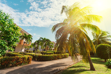 palm trees with green leaves on a background of blue sky and buildings. Tropical houses coconut palm near sea in sunny day on the island. Wall mural