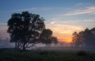Early morning in foggy field. Lonely trees surrounded of green field and fog Fototapete