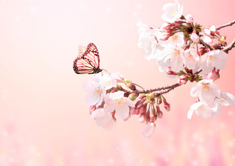 Wall Mural - Beautiful magic spring scene with sakura flowers