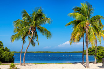 Fototapete - Beautiful beach with palms and turquoise sea in Florida Keys.