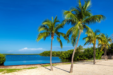Wall Mural - Beautiful beach with palms and turquoise sea in Florida Keys.