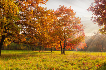 Garden Poster Red oaks on glade edge in autumn park at sunset