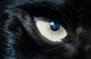 Photo sur Plexiglas Loup Eye of black wolf close-up