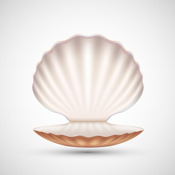 Open empty seashell icon isolated on a white background