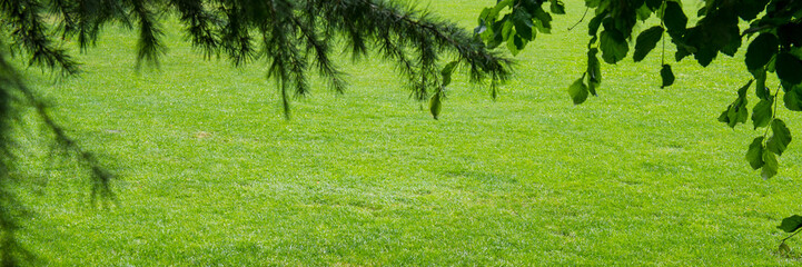 Tree branches and green grass in a city park. Web banner.