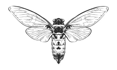 Vector Engraving Insect