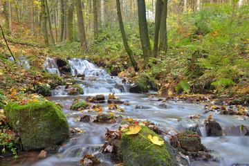 Bergbach im Naturpark Thüringer Wald im Herbst