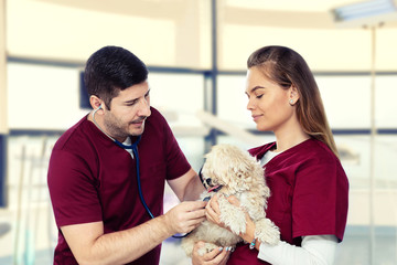 Smiling vet examining dog with stethoscope at clinic