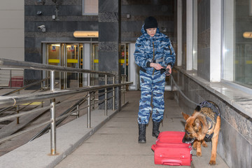 Female police officer with a trained german shepherd dog sniffs out drugs or bomb in luggage....