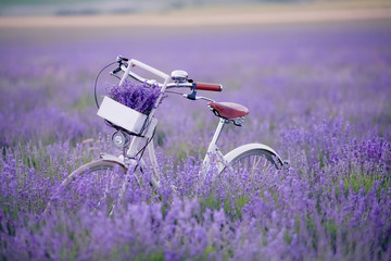 Classic bike stands in a field with lavender closeup.