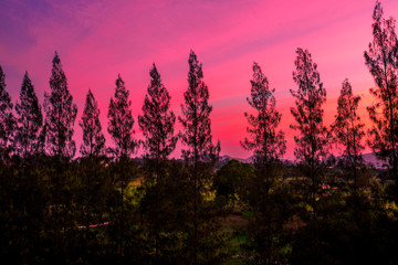 Deurstickers Candy roze The natural blurred background of the twilight light of the evening in the sky in the pine trees or mountains, the beauty of the weather during the day.