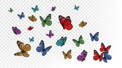 Flying butterflies. Colorful butterfly isolated on transparent background. Spring and summer insects vector illustration. Butterfly summer and spring insect, flying animal Fotomurales