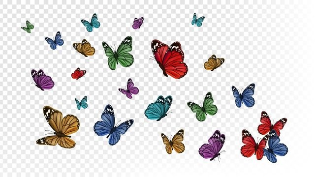 Flying butterflies. Colorful butterfly isolated on transparent background. Spring and summer insects vector illustration. Butterfly summer and spring insect, flying animal