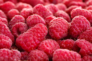 Wall Mural - heap of fresh ripe raspberry fruits as textured background