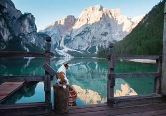 Dog on a pier on Lake braies, Italy. Jack Russell Terrier in nature. Traveling with a pet