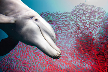 Foto op Plexiglas Dolfijn bottlenose dolphin underwater on reef red gorgonia close up look