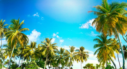 Beautiful tropical palm trees against blue sky with white clouds. Natural background with copy space.