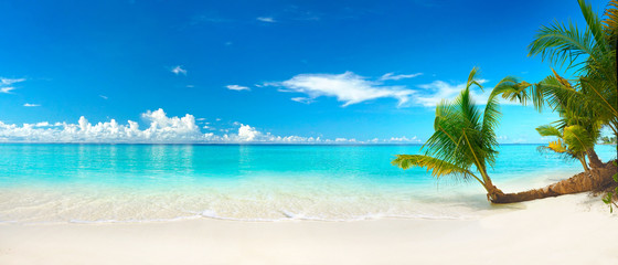 Photo sur Aluminium Palmier Beautiful beach with white sand, turquoise ocean, blue sky with clouds and palm tree over the water on a Sunny day. Maldives, perfect tropical landscape, ultra wide format.