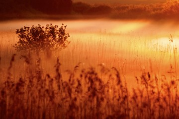 Türaufkleber Rotglühen Fog over wetlands with sunrise