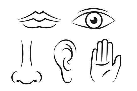 5 sense line icon set. Clipart image isolated on white background