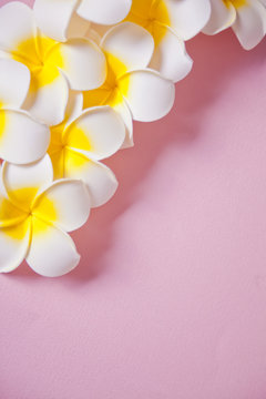Frangipani plumeria flowers on the pink background. Copy space. Top view. Tropical composition.