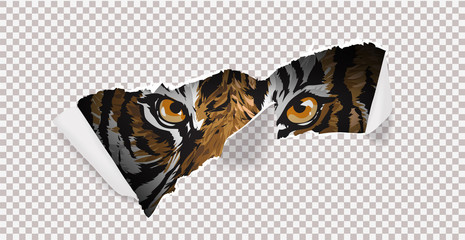 wild hunt  with tiger and claw mark illustration. Trigger walking in the shadow illustration
