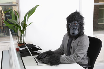 Zelfklevend Fotobehang Aap Portrait of young man in gorilla mask using laptop at office