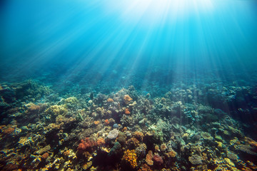 Foto op Plexiglas Koraalriffen a Underwater coral reef on the red sea