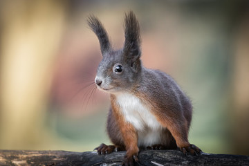 cute and funny squirrel adventures in the forest
