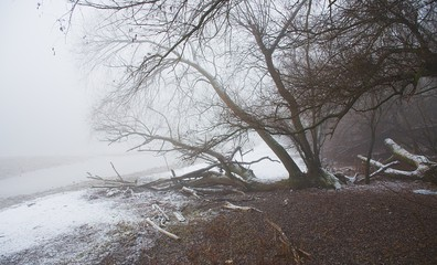A view of fog on a river. Location - photo shoot by the river Vah Komarno /Slovakia/. Caught vegetation by the river.
