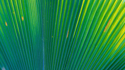 Palm leaf close up picture