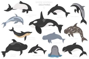 Dolphins set. Marine mammals collection. Cartoon flat style design