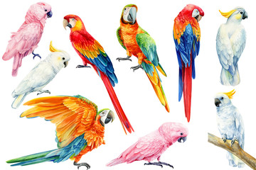 set of parrots, white and pink cockatoo, red and yellow macaw on an isolated white background, watercolor illustration, clipart tropical birds Fototapete