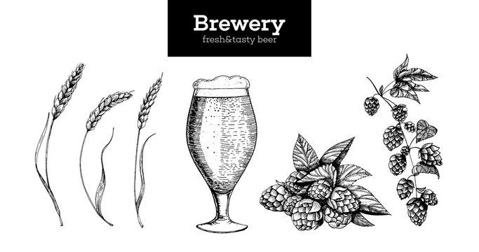Beer, Hop and Malt vector illustration. Craft beer packaging illustration. Vintage elements. Brewing beer. Hand drawn sketch, retro illustration.