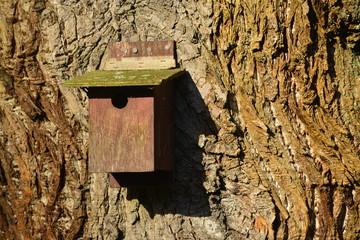 Birds nest, U.K. Box on a wide Turkey Oak.