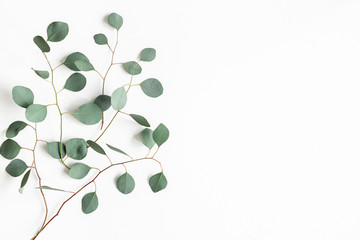 Aluminium Prints India Eucalyptus leaves on white background. Frame made of eucalyptus branches. Flat lay, top view, copy space