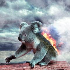 Wall Murals Koala koala in tree