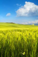 Italy spring countryside landscape, green farmland over blue sky