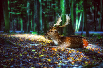 Magical deer with antlers in forest