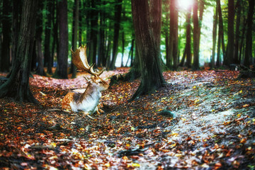Magical deer with antlers in wilderness
