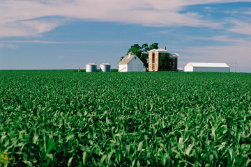 Field with farm buildings beyond