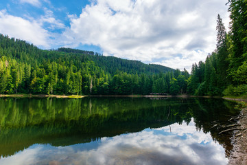 mountain lake in summertime. great outdoor nature scenery. coniferous forest with tall trees on the shore reflecting in clear water. deep blue sky with clouds. beautiful landscape