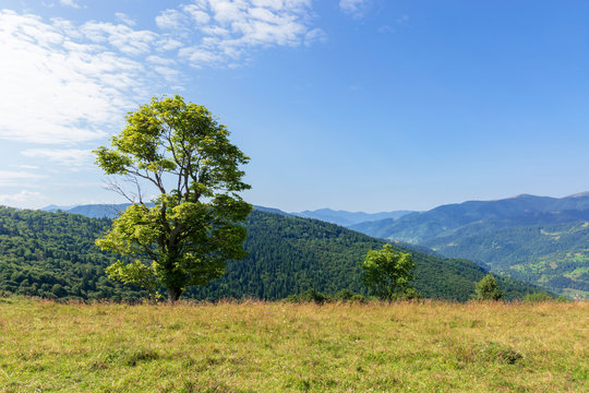 tree on the meadow in mountain scenery. beautiful summer landscape on a sunny day. wonderful weather at high noon with clouds on the blue sky